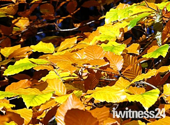 Autumn at Woodbury Castle