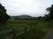 Misty view from Colyford Common
