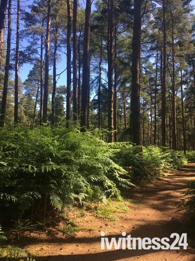 Beautiful Thetford Forest at High Lodge