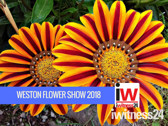 COMPETITION: 🌸WESTON FLOWER SHOW 2018.🌻