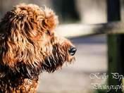 Beautiful dogs 🐕🐾