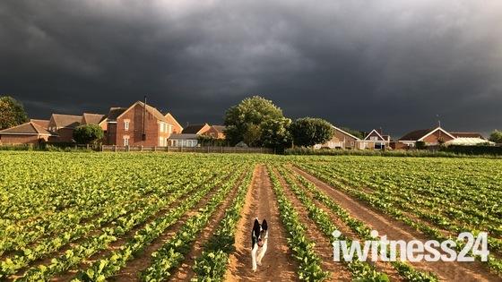 Stormie walk in North Walsham