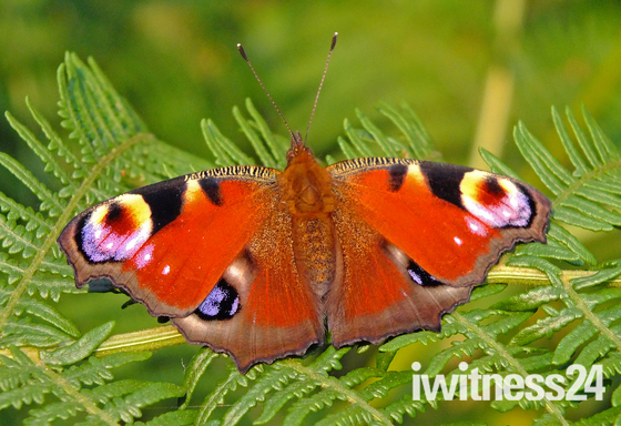Tunstall Forest butterfly