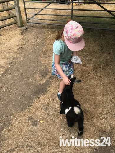 A morning at the rare breeds farm Baylham