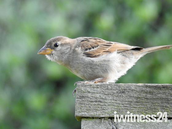 Robins & Sparrows