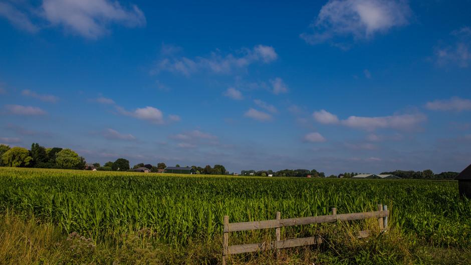 Zon, blauw en wat wolkjes om 10.00 uur in het Rivierengebied