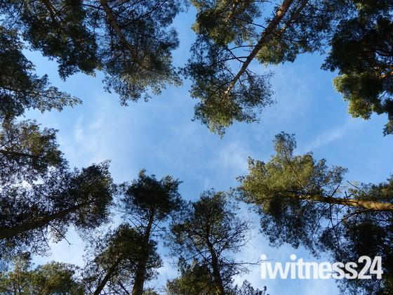 LOOK UP, TREE CANOPY