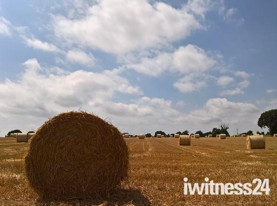 A Summer scene im Suffolk