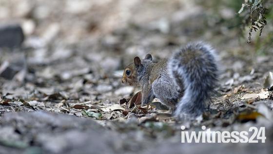 Wildlife in east devon