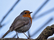 Robin, thinking about raising a family in Clevedon