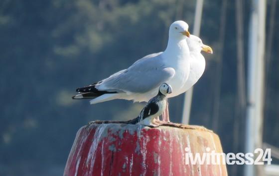 Birds at Felixstowe Ferry