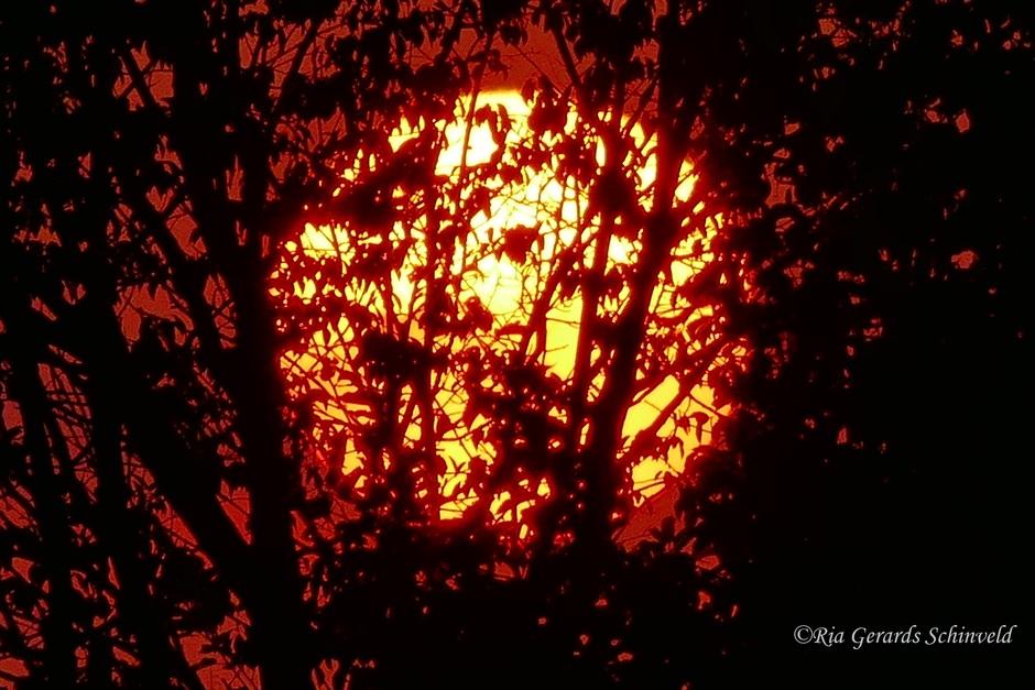 Zonsondergang in het Schinveldse bos