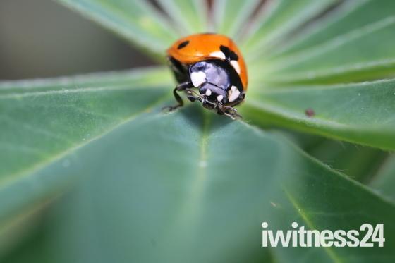 Bishey Barney Bee