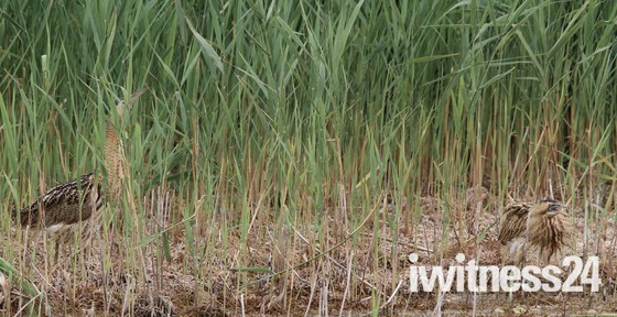 From fishing to swimming then the meeting