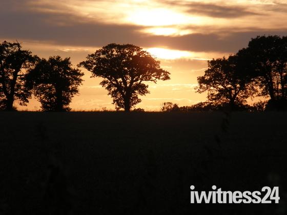 safari sunsets.