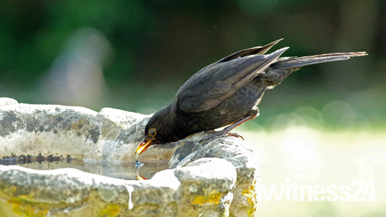 Make sure there is water for the birds this hot weather