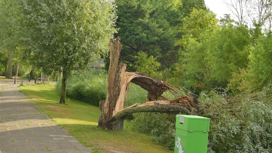 Geveld door de storm Rijnsburg, Wilg