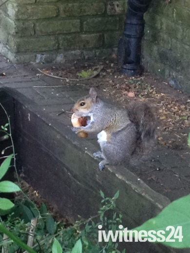No low carb diet for this squirrel