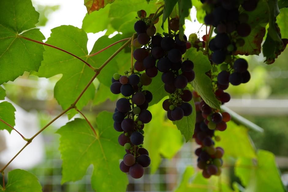 Prima wijnjaar