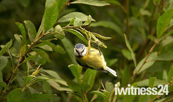 Titchwell Nature Reserve