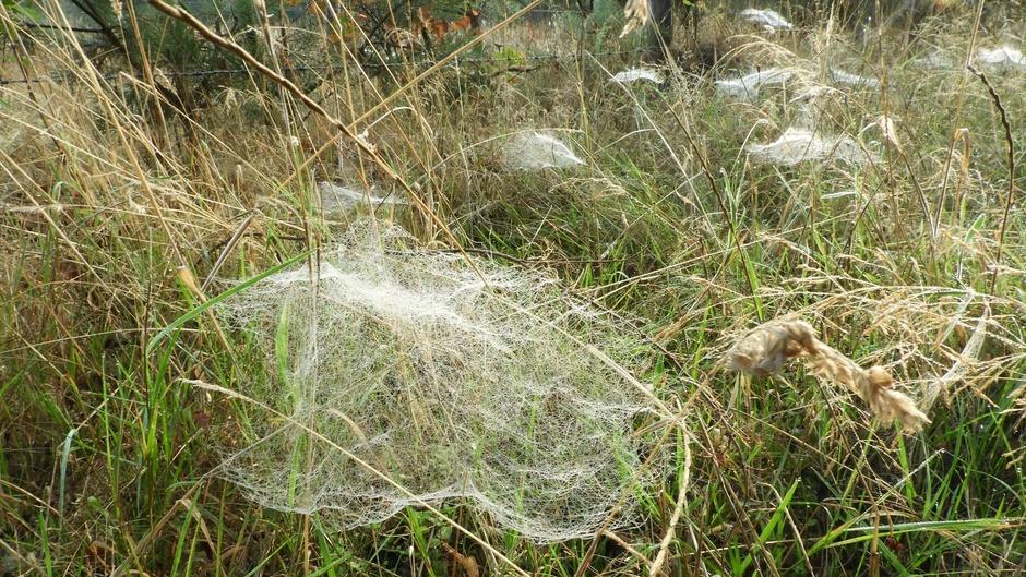 De spinnen komen er weer aan !
