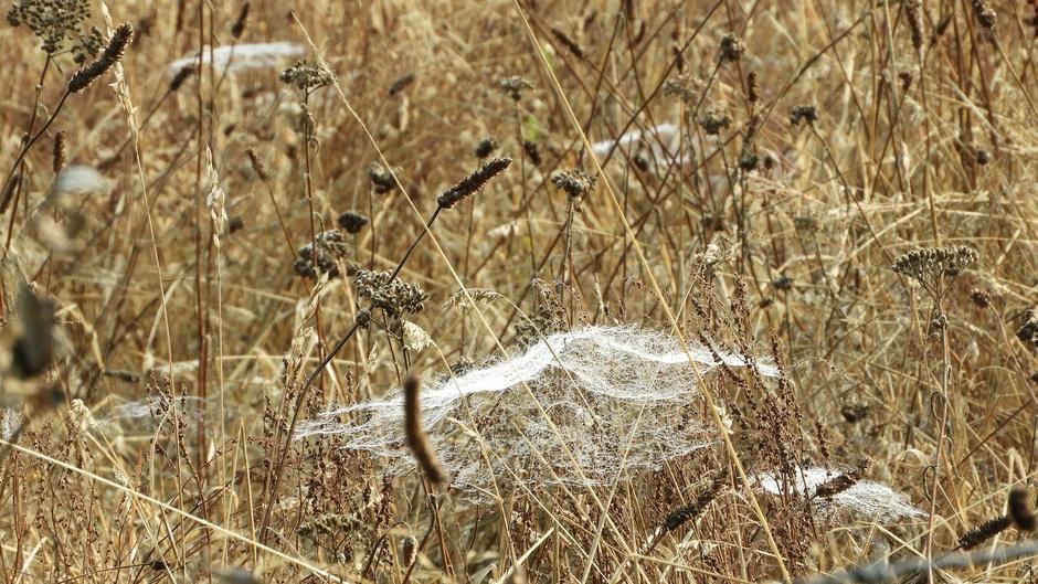 Herfstig tafereel met spinnenweb