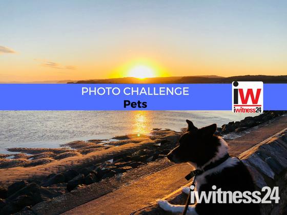 📸 PHOTO CHALLENGE: Pets 📸