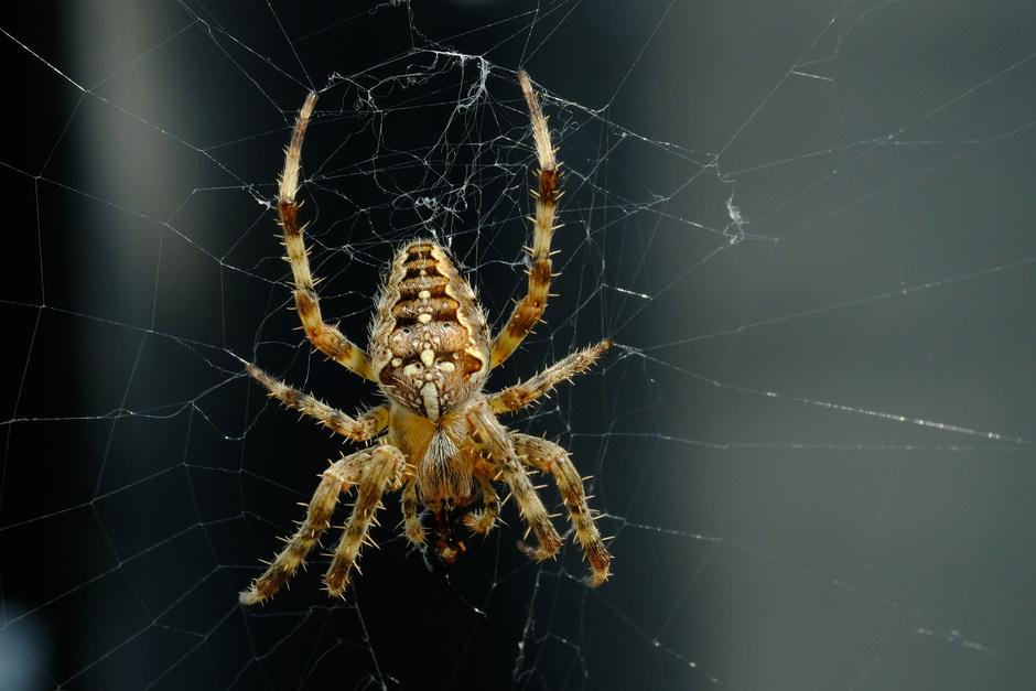 het is weer volop spinnenseizoen