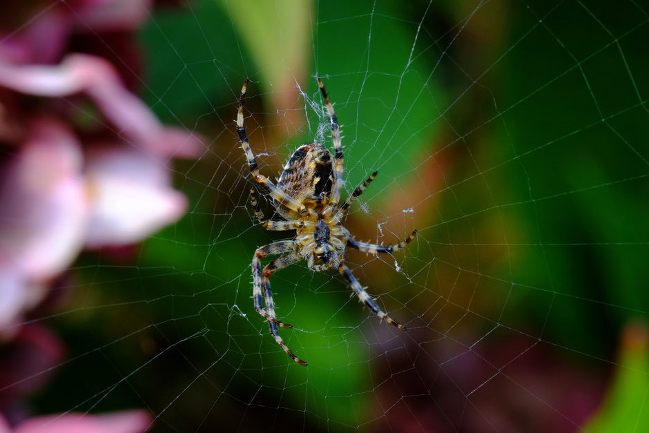 spinnetje in zijn web
