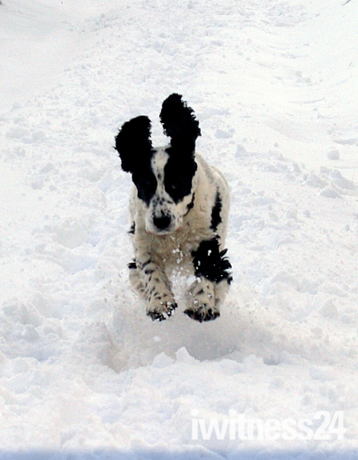 Leaping the snowdrift