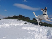 Maddie leaping on the March 2018 snow