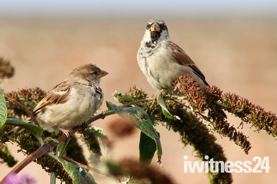 There's something special about sparrows