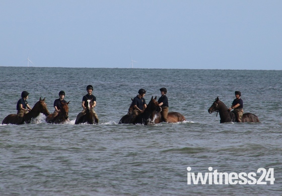 Horse Holiday