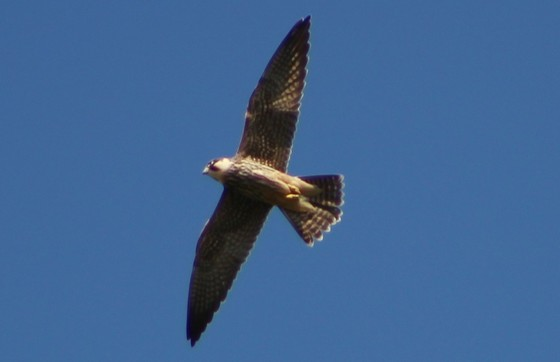Hobby over my head