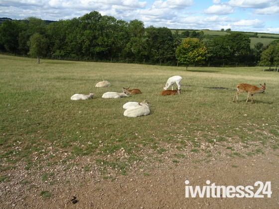 """Deers in """"World Of Country Life"""""""