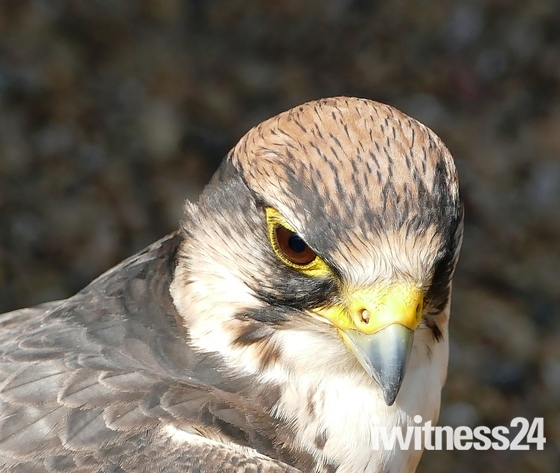 Stonham Barns Owl Sanctuary.