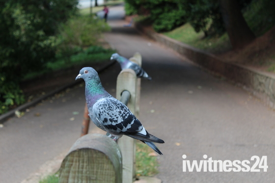 A scary seagull, two photogenic pigeons and a squirrel crazy for nuts.