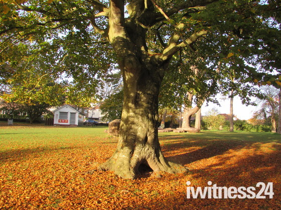 Autumn Leaves at Ashcombe Park, Weston-super-Mare