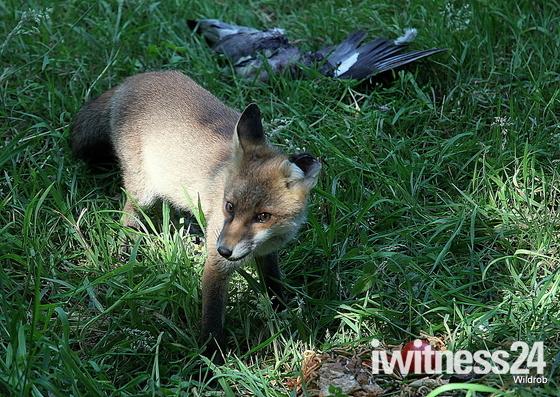 Wildlife Photo Challange