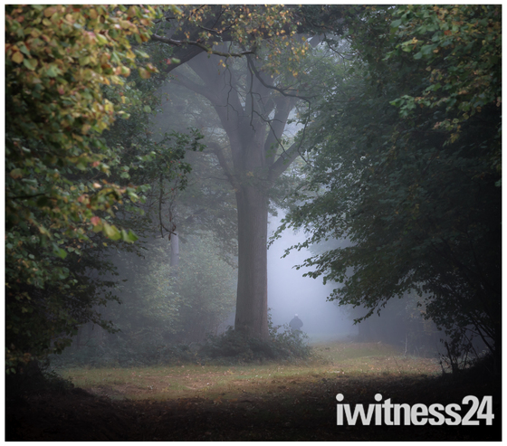 A walk in Hatfield Forest