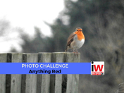 📸 PHOTO CHALLENGE: Anything Red 📸