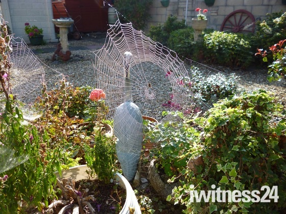 Spiders web in the autumn sun