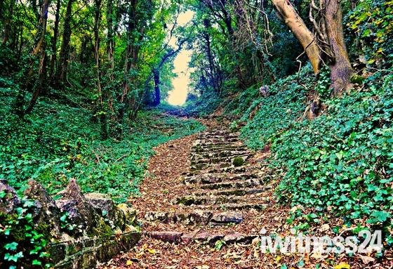 Monk's Steps.