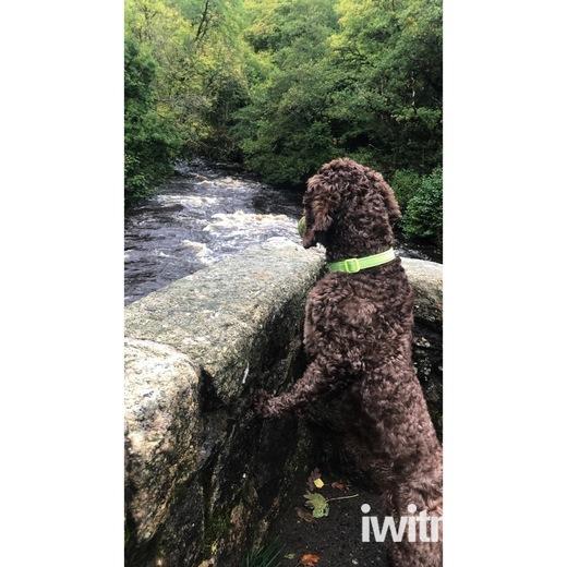 Stunning autumnal Fingle Bridge walks
