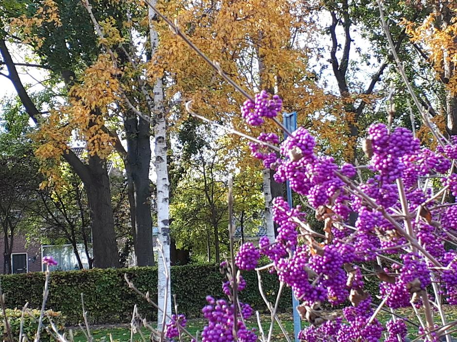Herfstkleuren te kust en te keur.