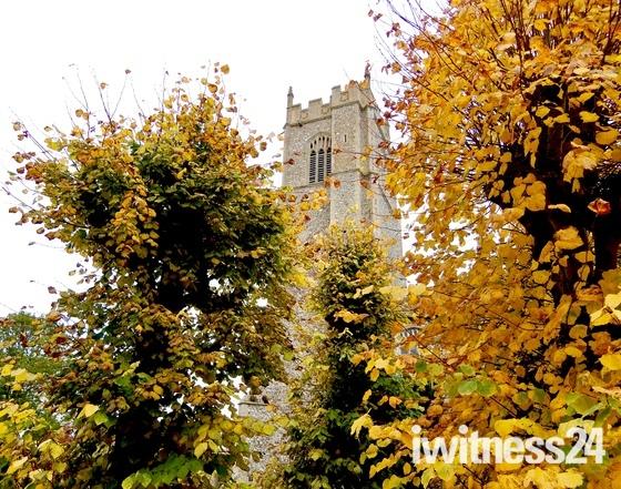 Through the autumn trees
