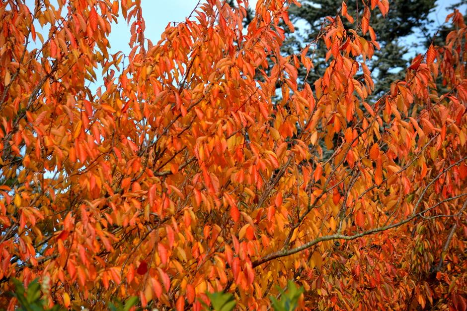 Herfstkleuren  overal  bessen en bladeren