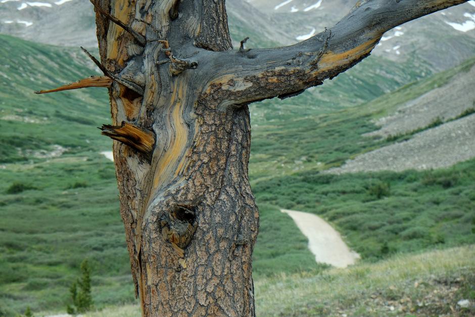 uit het archief: dood hout