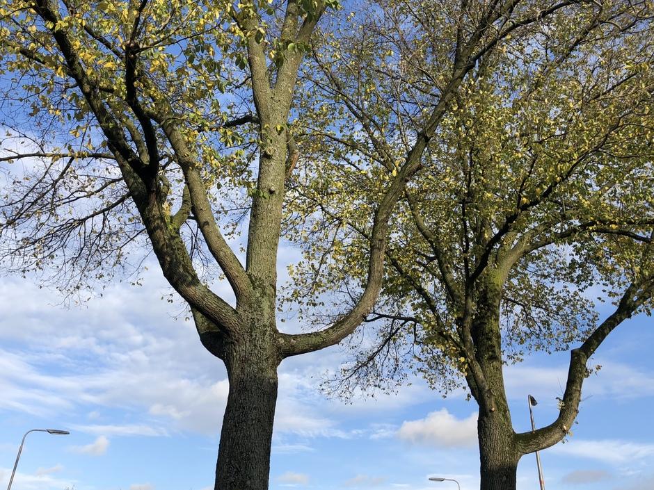 Bomen verliezen snel hun blad