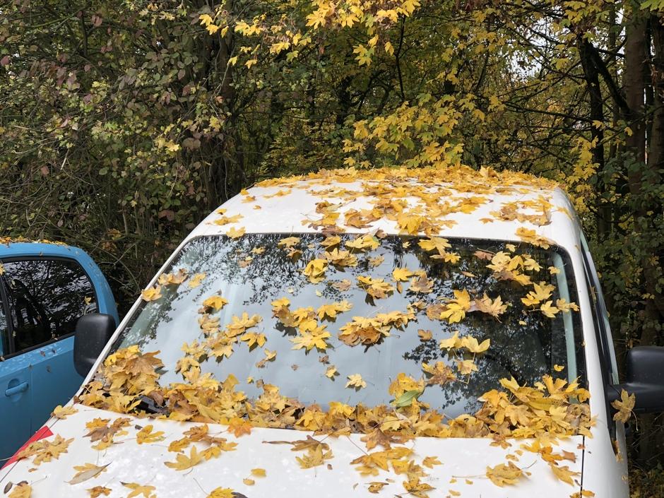 Veel bladval op de geparkeerde auto